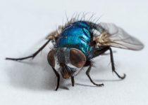 come tenere lontani gli insetti estivi